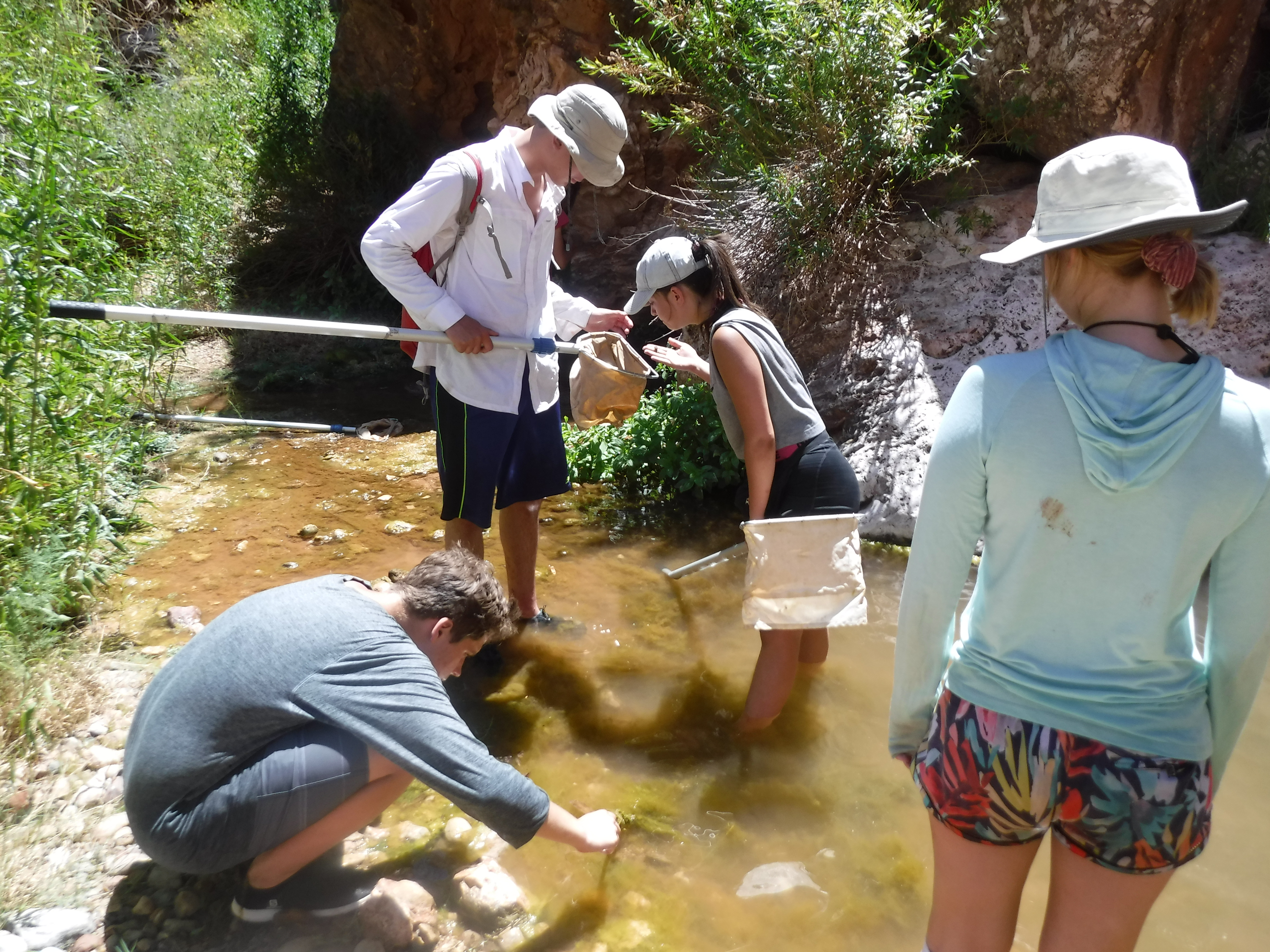 Grand Canyon Youth participants stand in water with nets looking for dragonfly larvae